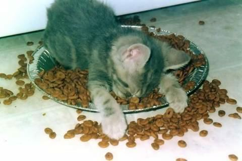 Kitty asleep on its plate