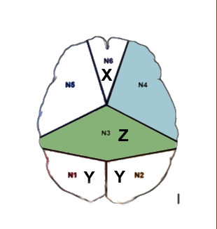 students brain template